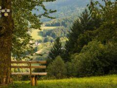 Schwarzwaldsteig
